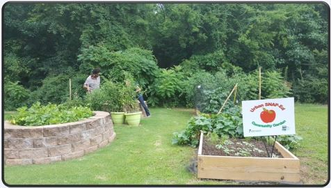 community garden with a person gardening