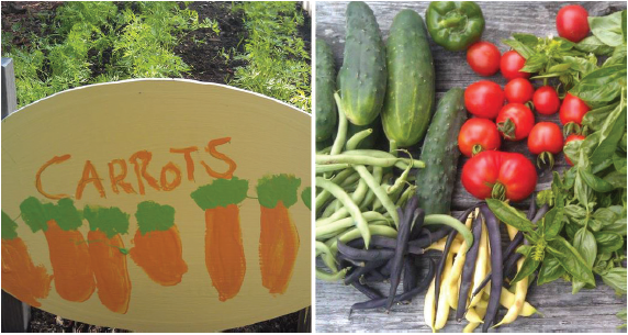 carrot garden sign and fresh vegetables from the garden