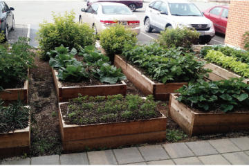 raised garden beds next to a parking lot