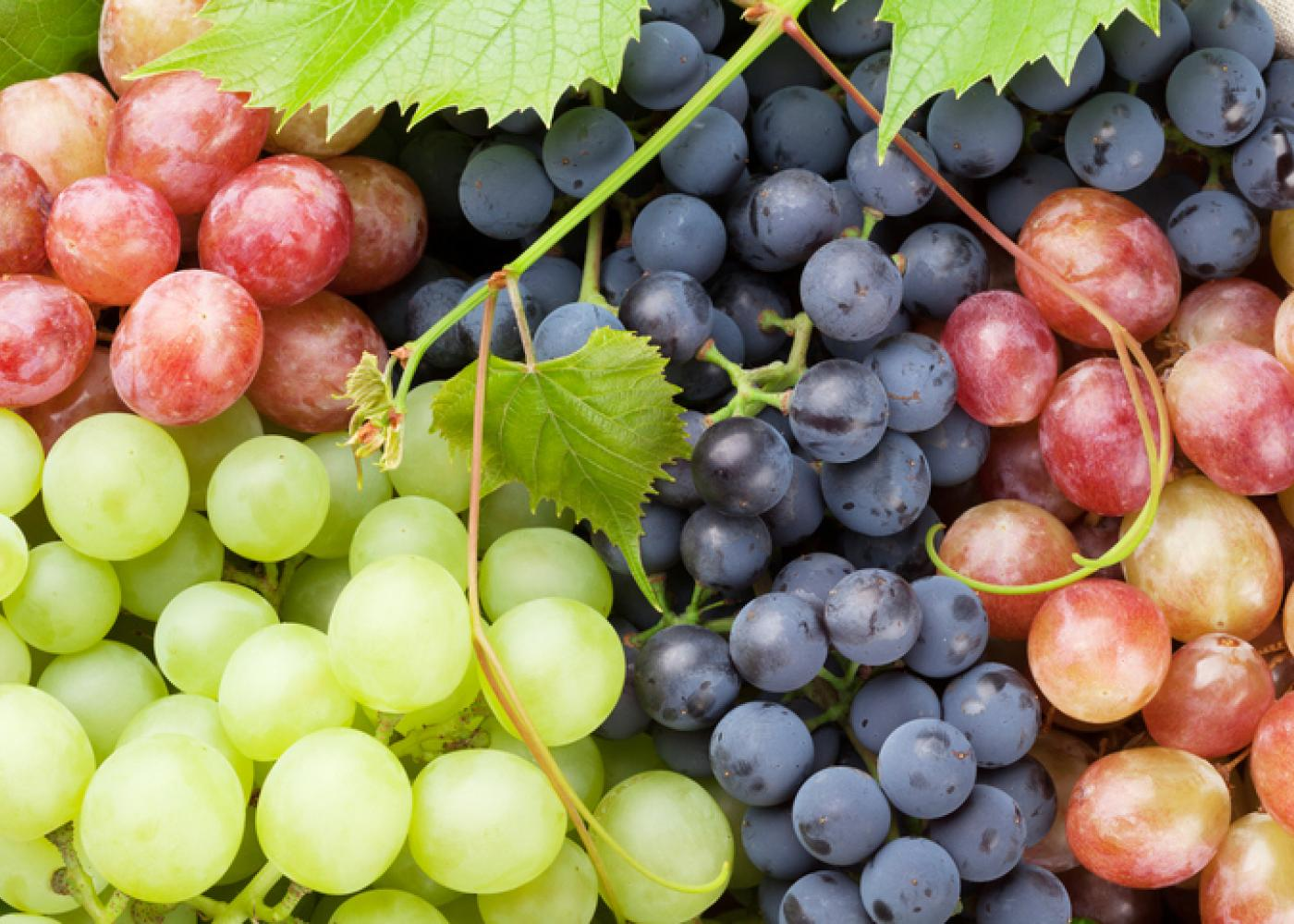 red, green, and purple grapes