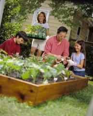 A family tends to their vegetable garden