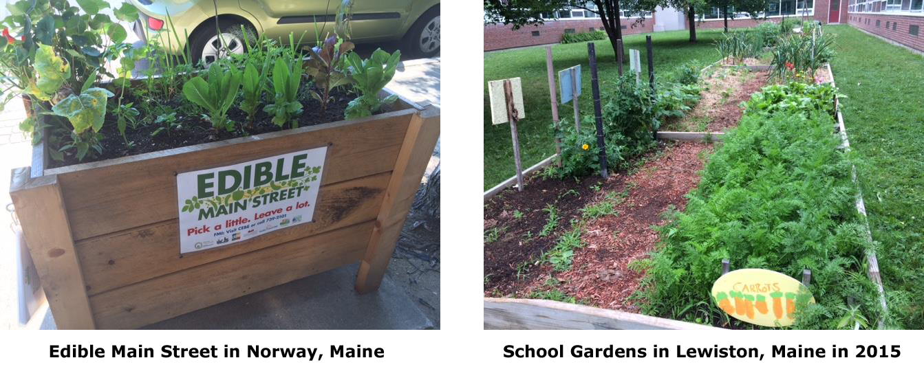 photo of Edible Main Street in Norway, Maine and photo of School Garden in Lewiston Maine in 2015