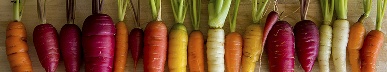 row of different colored carrots
