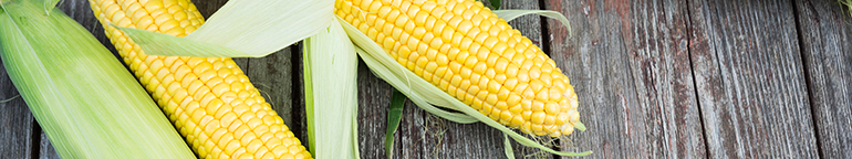 yellow corn in husk showing kernels